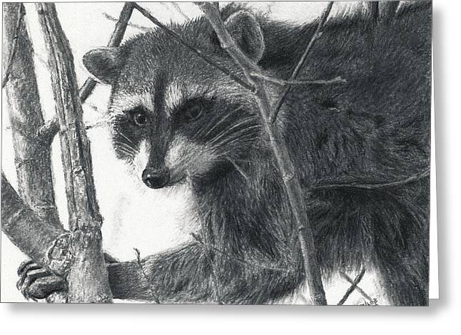 Photo-realism Pastels Greeting Cards - Raccoon - Charcoal Experiment Greeting Card by Joshua Martin