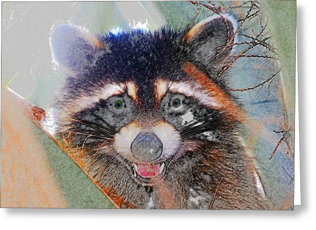 Raccoon Digital Art Greeting Cards - Raccoon face Greeting Card by David Lee Thompson