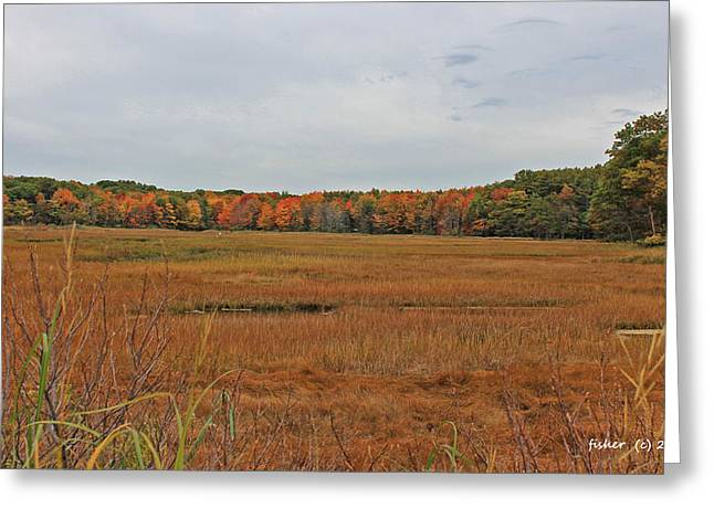 Rachel Carson Greeting Cards - Rachel Carson National Wildlife Refuge Greeting Card by Richard Fisher