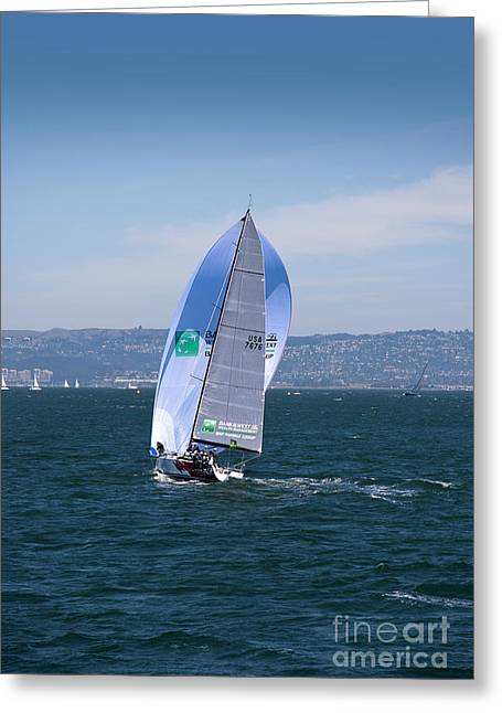 California Sea Lions Greeting Cards - Racing before the Wind Greeting Card by Brenda Kean