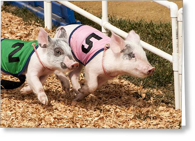 Piglets Greeting Cards - Racing Pigs Greeting Card by Bruce Frye