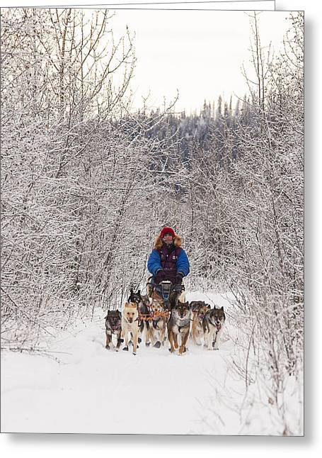 Dog Sled Racing Greeting Cards - Racing Through the Aspens Greeting Card by Tim Grams