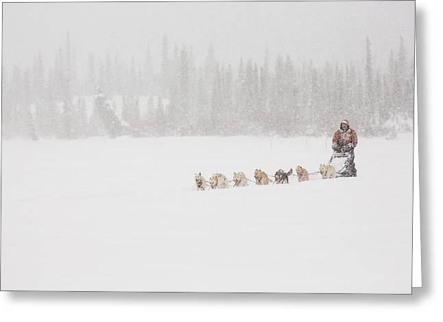 Dog Sled Greeting Cards - Racing Through the Falling Snow Greeting Card by Tim Grams