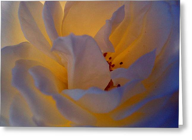 Radiance Greeting Card by Cathleen Cario-Reece