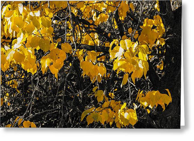 Gold Leave Greeting Cards - Radiance leaves Greeting Card by Gloria Pasko