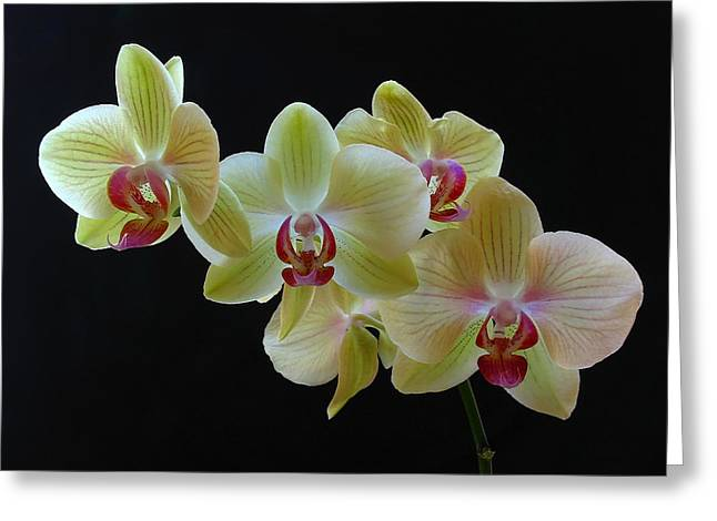 Orchid Canvas Greeting Cards - Radiant Orchid Greeting Card by Juergen Roth
