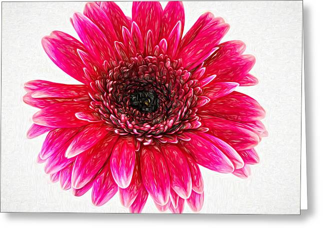 Paint Photograph Greeting Cards - Radiant - Paint Greeting Card by Steve Harrington