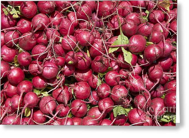 Fresh Radishes Greeting Cards - Radish Greeting Card by Tony Cordoza