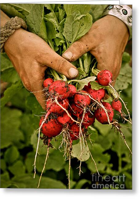 Local Food Greeting Cards - Radishes 2 Greeting Card by Carol Sullivan