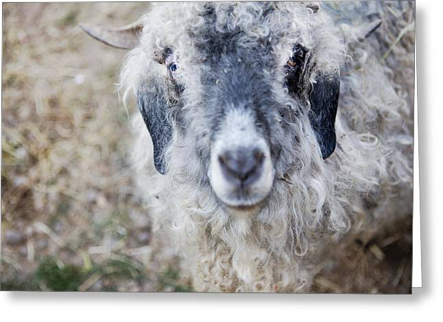 Raggedy Goat Greeting Card by Belinda Greb