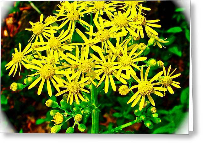 Natchez Trace Parkway Digital Greeting Cards - Ragwort in Donivan Slough at Mile 283 of Natchez Trace Parkway-Mississippi  Greeting Card by Ruth Hager