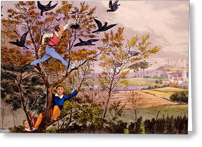 Climb Tree Greeting Cards - Raiding the Rooks Nest Greeting Card by Henry Thomas Alken