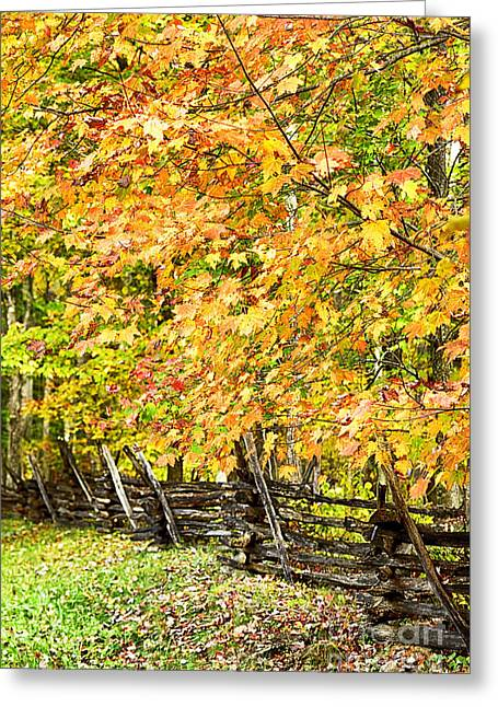 Split Rail Fence Greeting Cards - Rail Fence Fall Color Greeting Card by Thomas R Fletcher