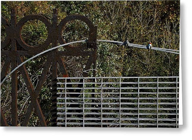 Grate Greeting Cards - Railing Greeting Card by Murray Bloom