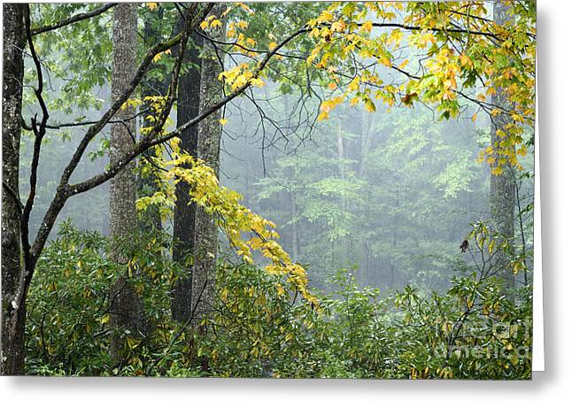 Pouring Greeting Cards - Rain and Fog along Gauley River Greeting Card by Thomas R Fletcher