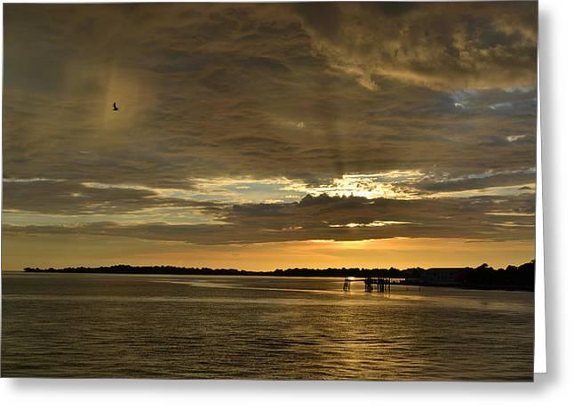 Cedar Key Greeting Cards - Rain Bird at Sunset Greeting Card by rd Erickson