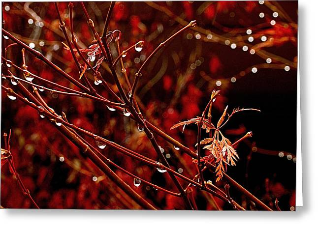 Red Leaves Greeting Cards - Rain Dance Greeting Card by Rona Black