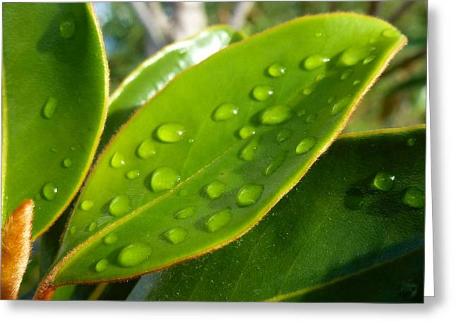 Sonoma Pyrography Greeting Cards - Rain Droplets on Leaves Greeting Card by Fabien White