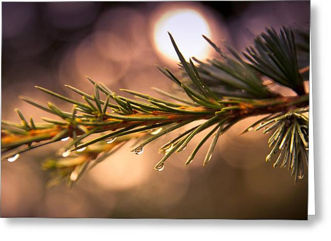 Rain Droplet Photographs Greeting Cards - Rain Droplets on Pine Needles Greeting Card by Loriental Photography