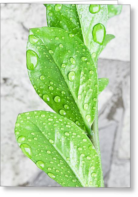 Hydro Greeting Cards - Rain drops Greeting Card by Tom Gowanlock
