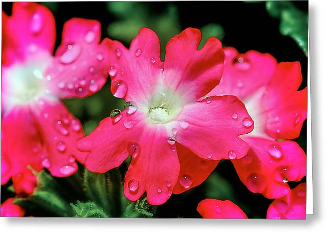 Drop Tapestries - Textiles Greeting Cards - Rain Flower Greeting Card by Dennis Bucklin