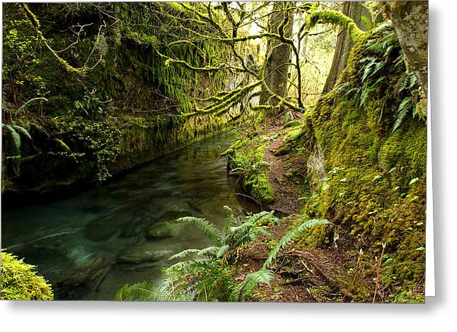 Randy Moss Photographs Greeting Cards - Rain Forest 2 Greeting Card by Randy Giesbrecht