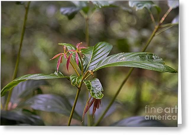 Close Focus Nature Scene Greeting Cards - Rain forest plant Greeting Card by Wendy Townrow