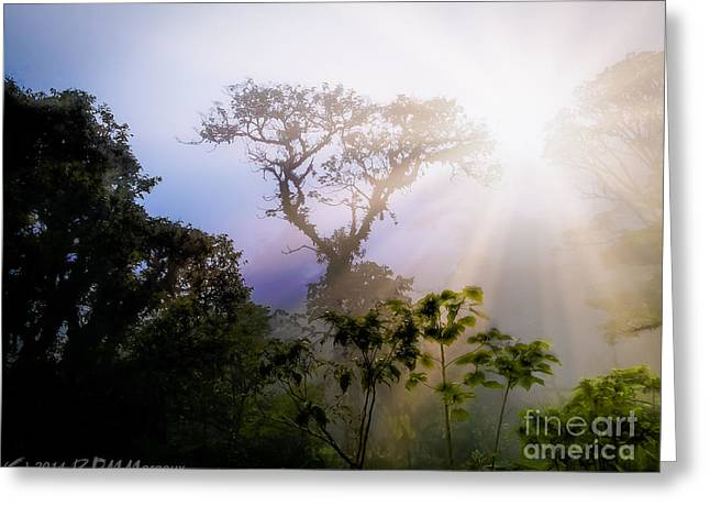 Rain Forest Sun Greeting Card by  rdm-Margaux Dreamations