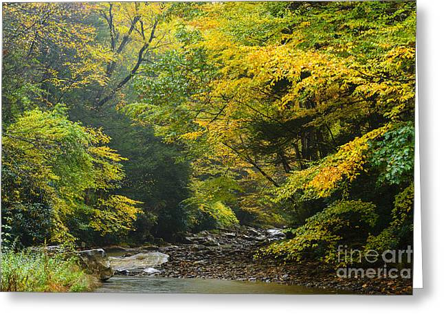 Late Fall Greeting Cards - Rain Gauley River Headwaters Greeting Card by Thomas R Fletcher