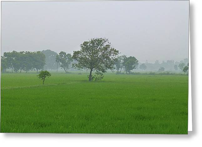 Raining Pyrography Greeting Cards - Rain Greeting Card by Girish J