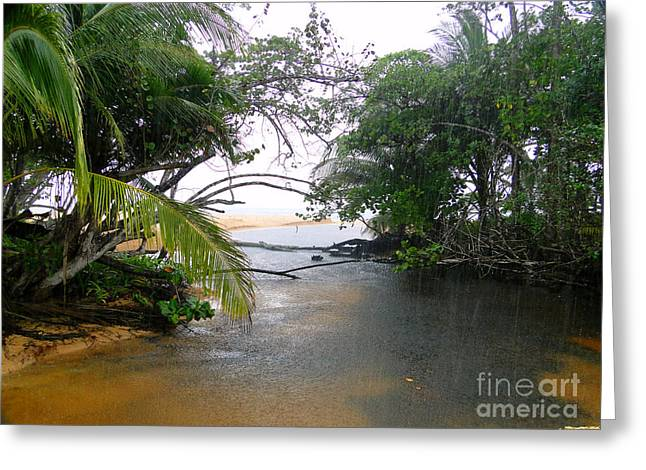 Al Central Greeting Cards - Rain In Bocas Del Toro Greeting Card by Al Bourassa