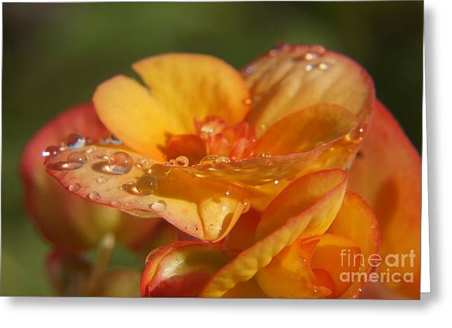 Rain Magic Greeting Card by Zori Minkova