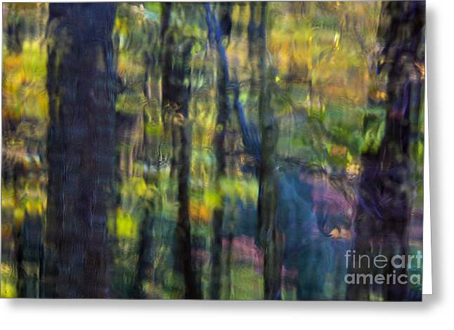 Muted Greeting Cards - Rain Muted Forest Greeting Card by John Greim