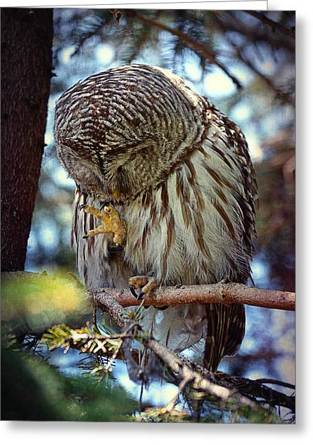 Rain Barrel Digital Art Greeting Cards - Rain Owl Greeting Card by Maria Angelica Maira