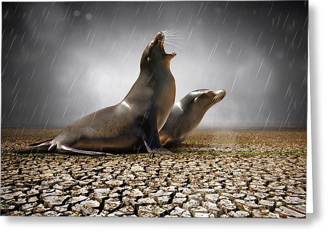 Ground Greeting Cards - Rain Relief Greeting Card by Carlos Caetano