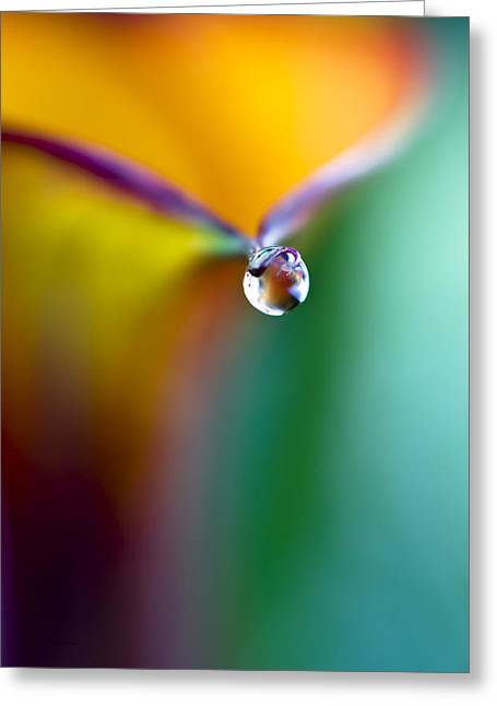 Sunlight On Flowers Greeting Cards - Rainbow Drop Greeting Card by Crystal Wightman