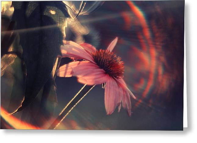 Echinacea Greeting Cards - Rainbow Flower Greeting Card by Magda  Bognar