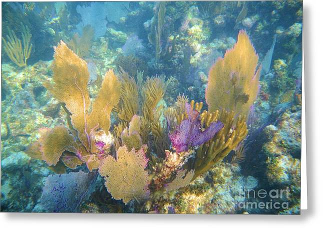 Sea Fan Greeting Cards - Rainbow Forest Greeting Card by Adam Jewell