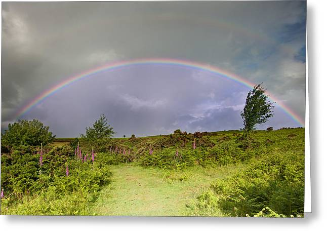 Foxglove Flowers Greeting Cards - Rainbow in stromy sky above landscape of foxgloves Greeting Card by Matthew Gibson