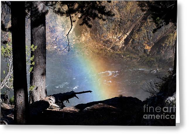 Silhouette Greeting Cards - Rainbow in the Woods Greeting Card by Cindy Singleton