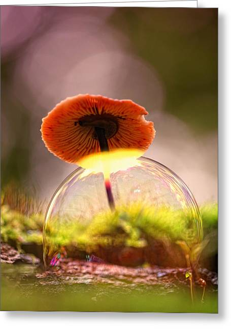 Round Fungi Greeting Cards - Rainbow Greeting Card by Kent Mathiesen