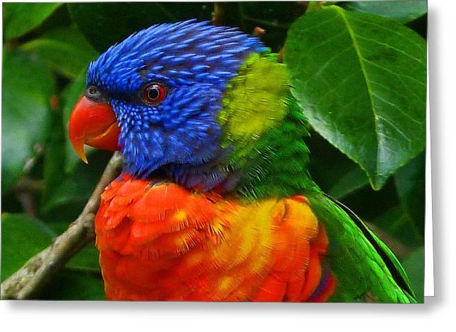 Rainbow Lorikeet Deep In Thought Greeting Card by Margaret Saheed
