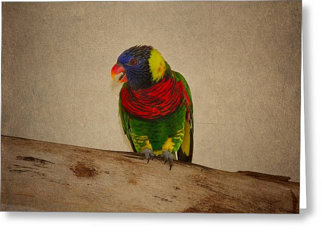 Coloured Plumage Greeting Cards - Rainbow Lorikeet Greeting Card by Kim Hojnacki