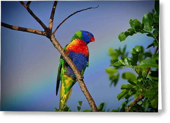 Rainbow Lorikeets Greeting Cards - Rainbow Lorikeet Parrot Greeting Card by Mountain Dreams