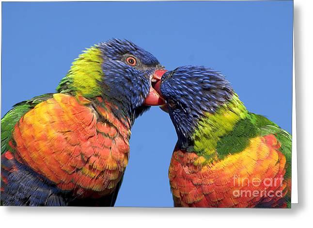 Ralser Greeting Cards - Rainbow Lorikeets Greeting Card by Steven Ralser