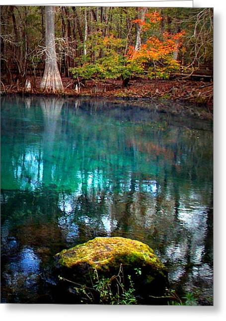 Manatee Springs Greeting Cards - Rainbow of Colors Manatee Springs1 Greeting Card by Sheri McLeroy