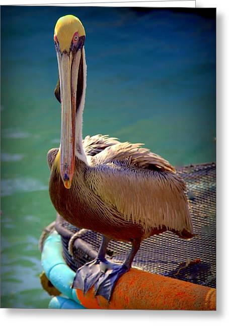 Rainbow Pelican Greeting Card by Karen Wiles