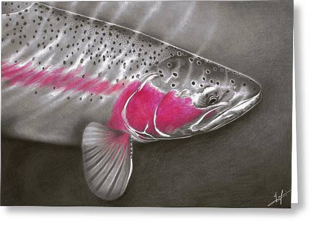 """rainbow Trout"" Greeting Cards - Rainbow Release Greeting Card by Nick Laferriere"