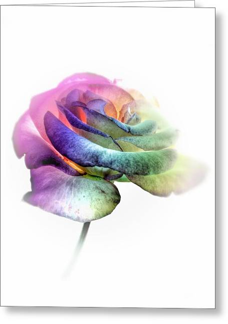Visionaries Designs Greeting Cards - Rainbow Rose Greeting Card by Marianna Mills