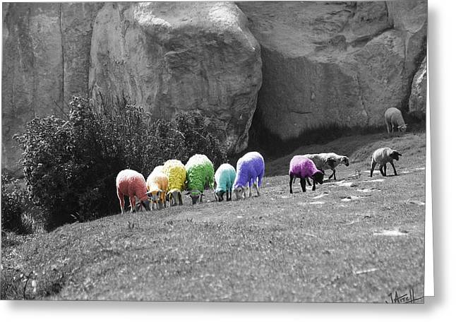 Sheeple Greeting Cards - Rainbow Sheep Greeting Card by Jay Aitch